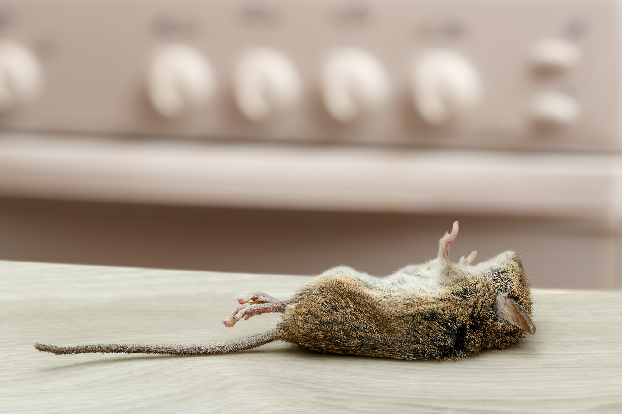 The Benefits Of Using Pest Control Professionals